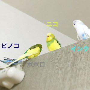 IMG_2720[1]